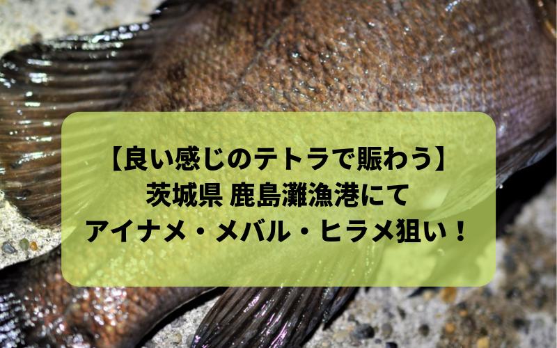 【2018年11月】鹿島新港・鹿島灘漁港で夜釣り アイナメ メバル シーバス ヒラメ狙い