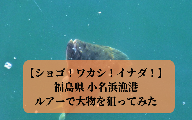 【ショゴ!ワカシ!イナダ!】2018年11月 小名浜漁港で釣り ルアーで大物 ヒラメ シーバス狙い