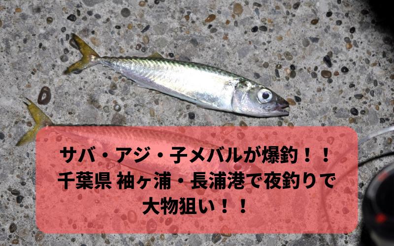 【2018年11月】サバ アジ 小メバルが爆釣? 千葉県 袖ヶ浦港・長浦港で夜釣り