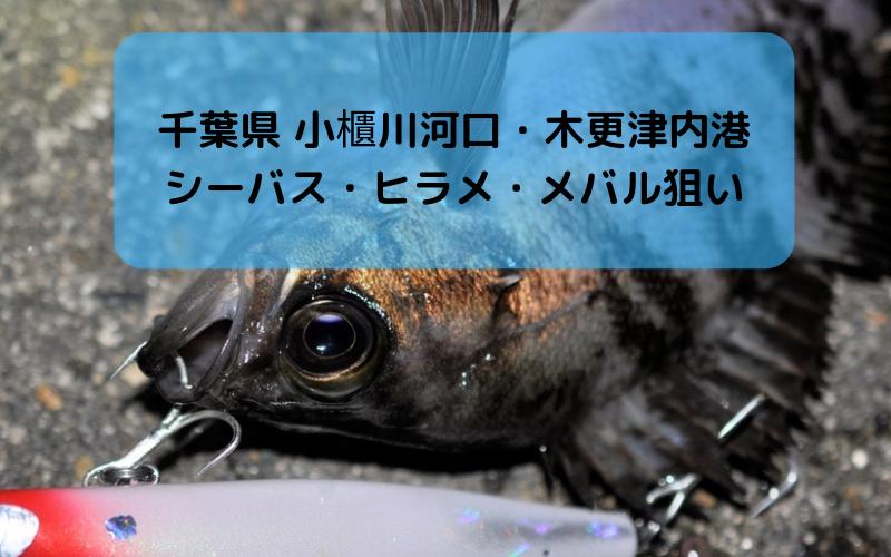 【2018年11月】千葉県 小櫃川河口と木更津内港でヒラメ・シーバス・メバル釣り