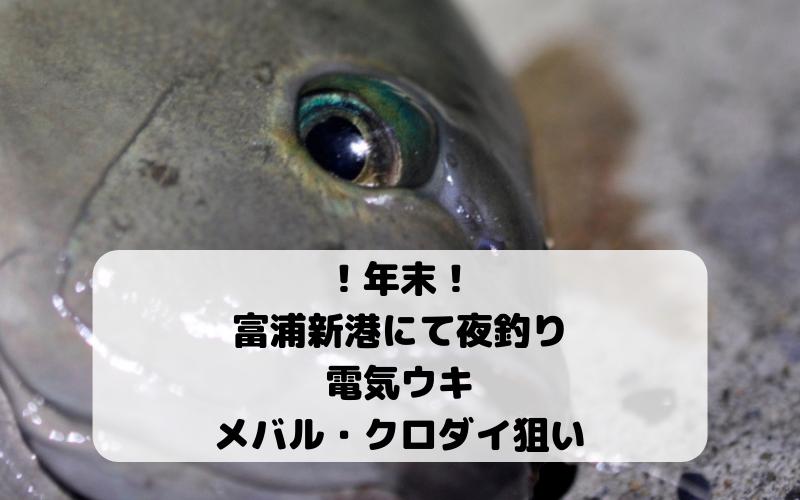 【2018年12月】千葉県 富浦新港で夜釣り 電気ウキでメバル・シーバス・ヒラメ・クロダイ狙い