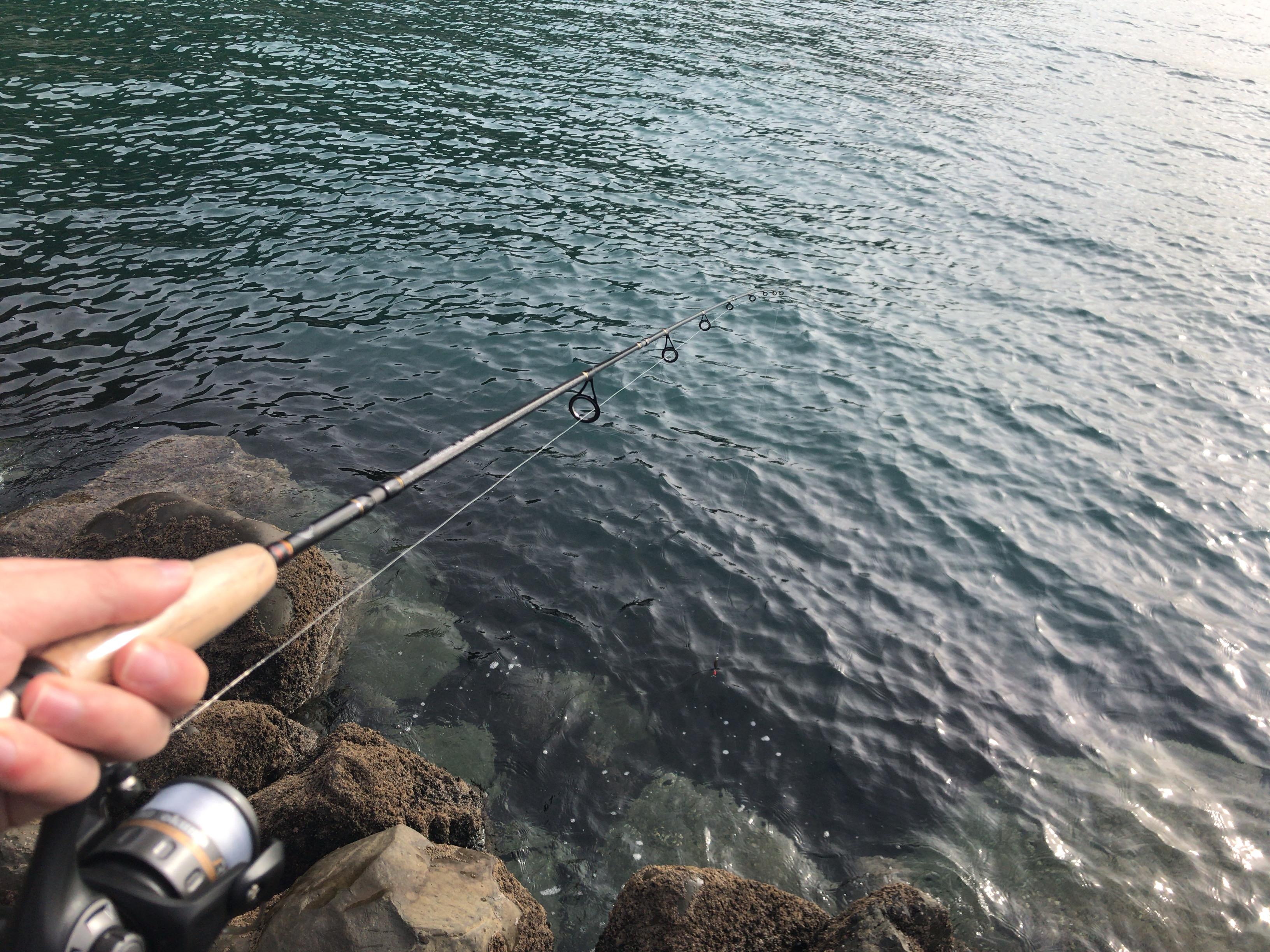 【2019年 ニュージーランド 釣り記】ウェリントン ROSENEATHにて釣りしてみた結果