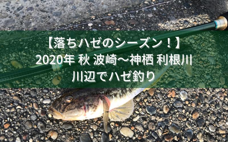 【落ちハゼのシーズン!】2020年 夏下旬 波崎~神栖 利根川の川辺でハゼ釣り