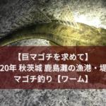 【巨マゴチを求めて】2020年秋 茨城 鹿島灘の漁港・堤防でマゴチ釣り